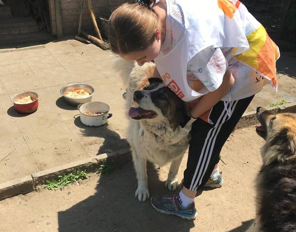 Оказание помощи приюту для животных